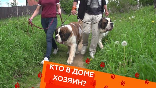 https://my.ntv.ru/home/promo/20190614/01085638_hd.jpg